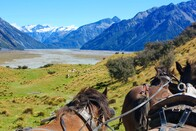 Lord of the Rings High Country Station Pioneering Clydesdale Experience & Scenic Day Tour