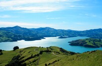 Akaroa & Banks Peninsula Wild Penguins Eco-Tour from Christchurch